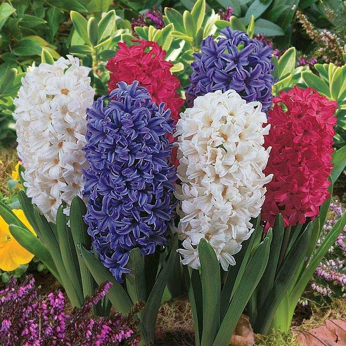 آموزش درست کردن گل سنبل خمیری