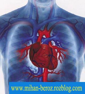 اهمیت و تاثیر گردش خون در بدنسازی