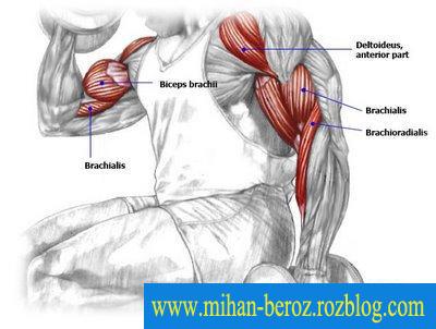 آموزش بدنسازی برای داشتن بازوهای عضلانی و قوی