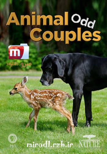 دانلود مستند جفت های عجیب حیوانات Animal Odd Couples