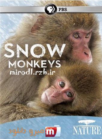 دانلود مستند میمون های برفی Nature: Snow Monkeys 2014