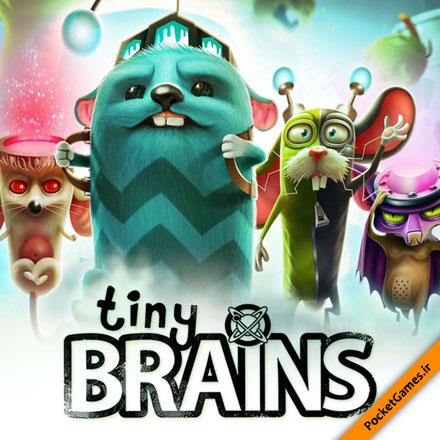 مغز های کوچک