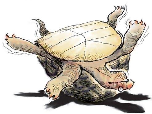 http://rozup.ir/up/navidyahyaei/Pictures/tanz/dead-turtle.jpg
