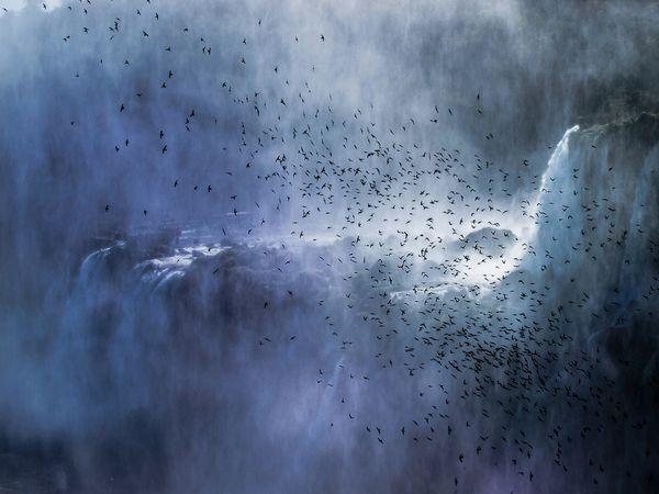 دسته ای از پرندگان و آبشار