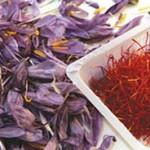 کاهش ۷۰ درصدی برداشت زعفران از مزارع نیشابور