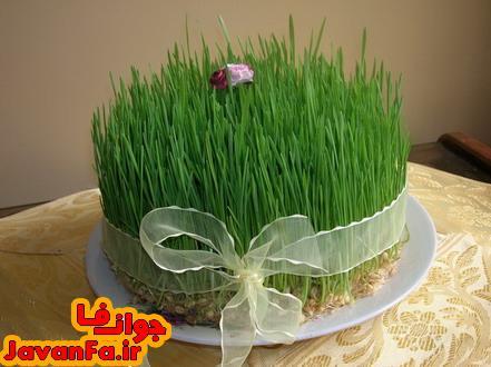آموزش کاشت سبزه عید نوروز با گندم و عدس