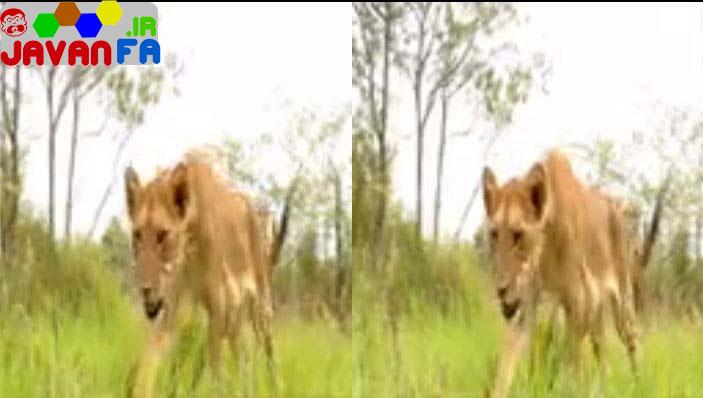 دانلود مستند کوتاه سه بعدی 3D Wildlife South Africa Big Five