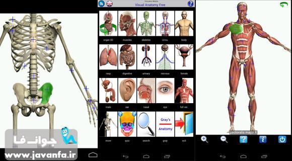 دانلود برنامه آناتومی بدن انسان برای اندروید Visual Anatomy Free