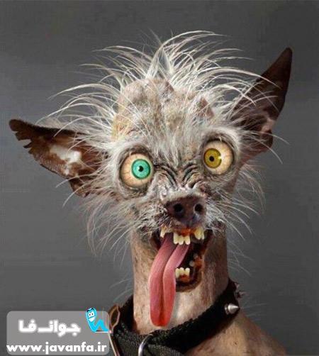 عکس خنده دار و جالب از حیوانات 93