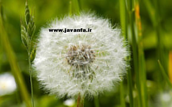 دانلود پوسته گل های تابستان برای ویندوز 7 و 8