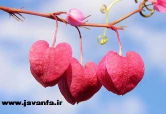دو دستور مجرب جهت افزایش عشق زن به شوهر