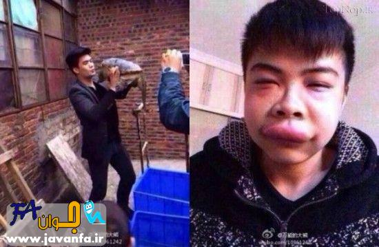 عواقب بوسیدن یک لاک پشت - عکس