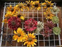 آموزش خشک کردن گل با شن