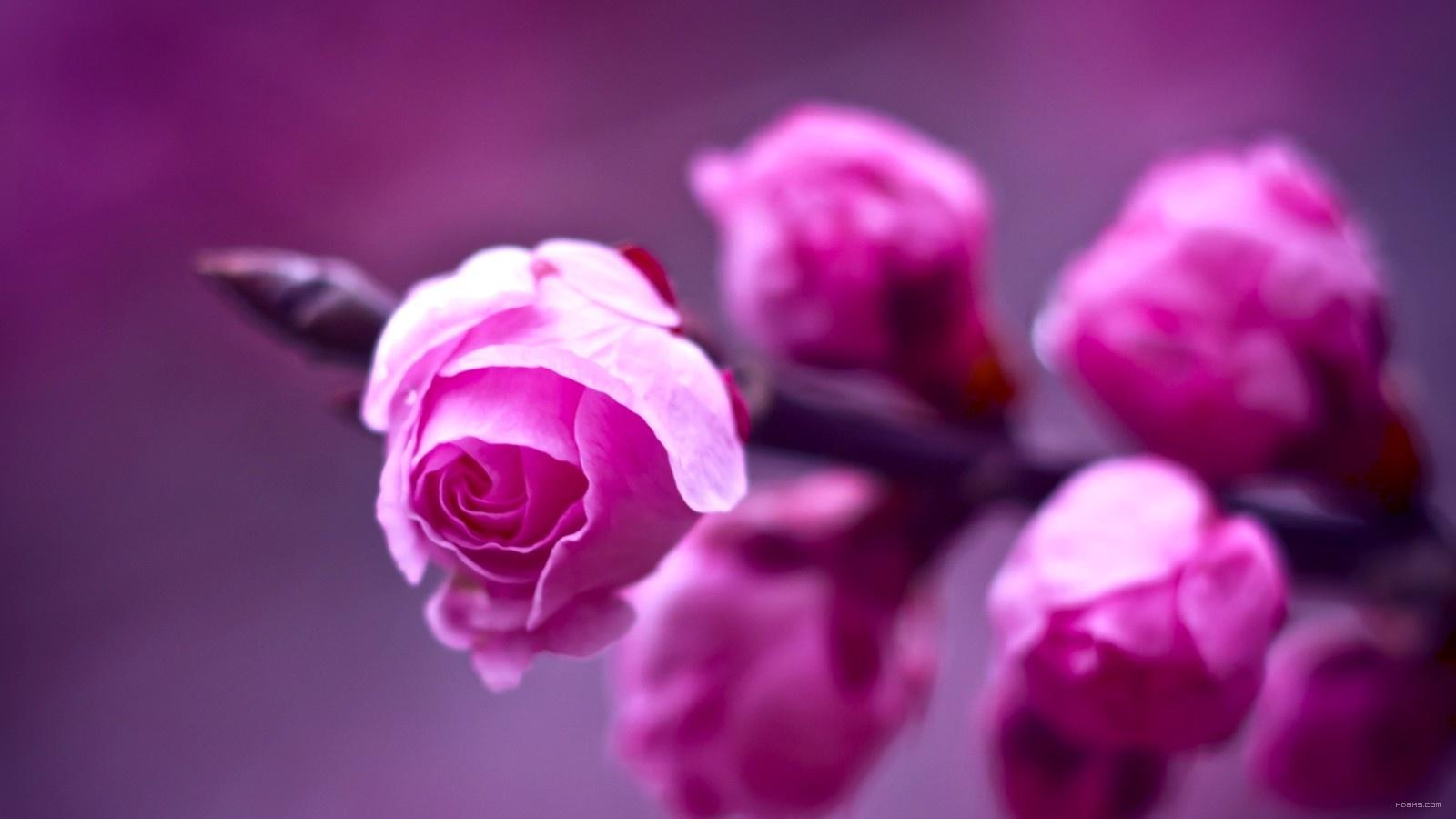 عکس+اچ+دی+گلها