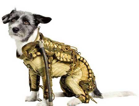 لباس سگهای فضایی چوب حراج میخورند+تصاویر