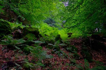 جنگل هلی دار؛ قلب سواد کوه