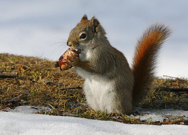 عکس های قشنگ و باکیفیت سنجاب های زیبا