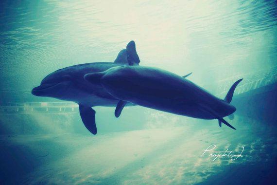 عکس های قشنگ و جدید دلفین ها new dolphin images