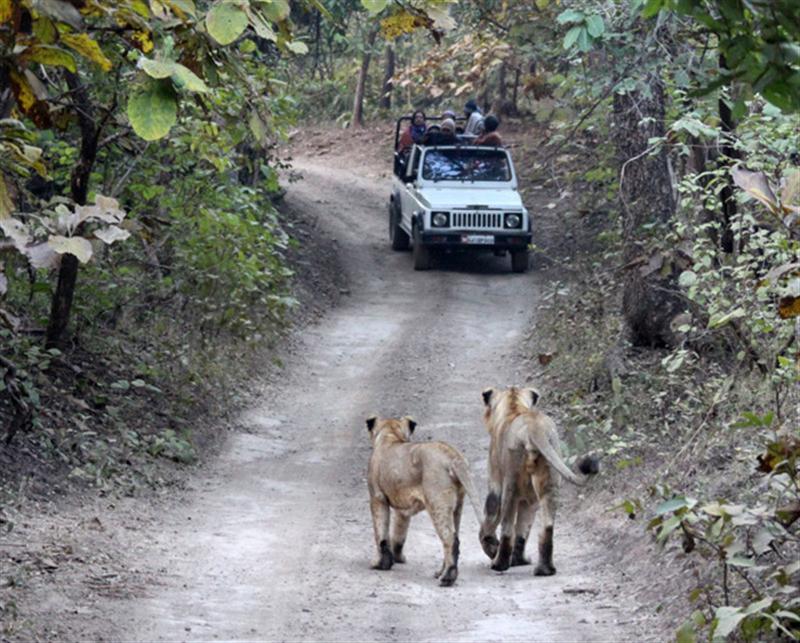 عکس های طبیعت هند تصاویر دیدنی هند