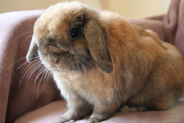 عکس خوشگل و ناز خرگوش ها شهریور 92