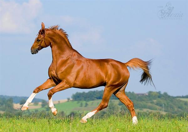 تصاویر دیدنی و قشنگ اسب ها شهریور 92 Pictures of horses