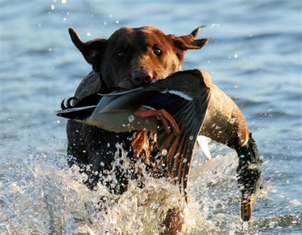 عکس های دیدنی شکار حیوانات عکس حبوانات وحشی