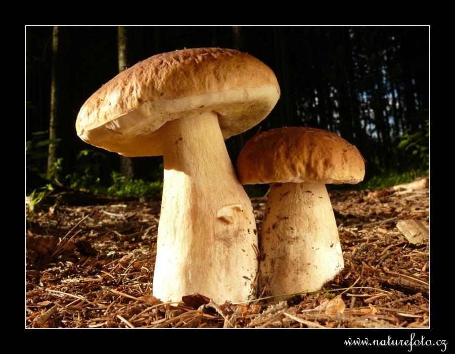 عکس هایی از قارچ ها
