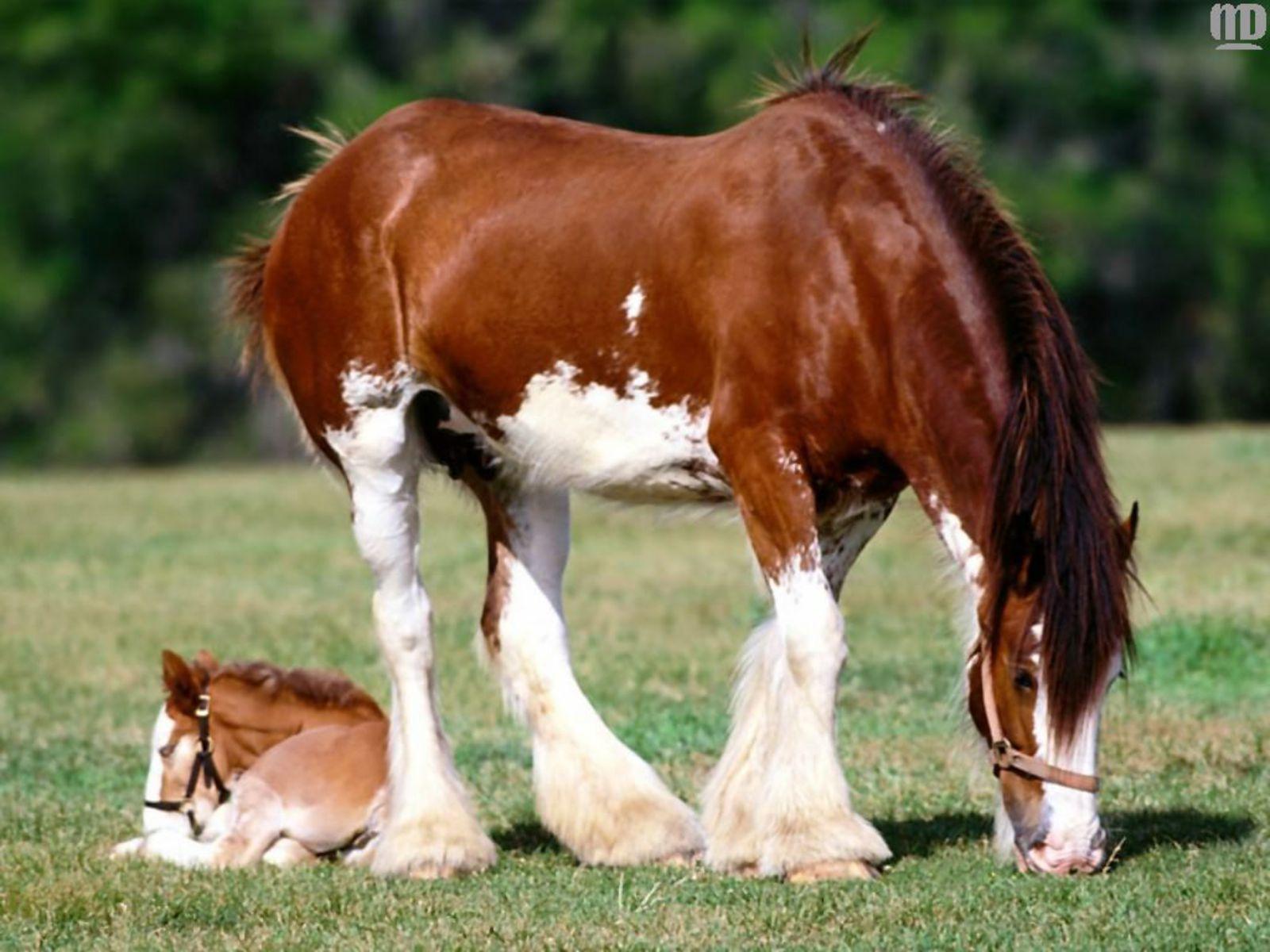 عکس های فوق العاده زیبای اسب