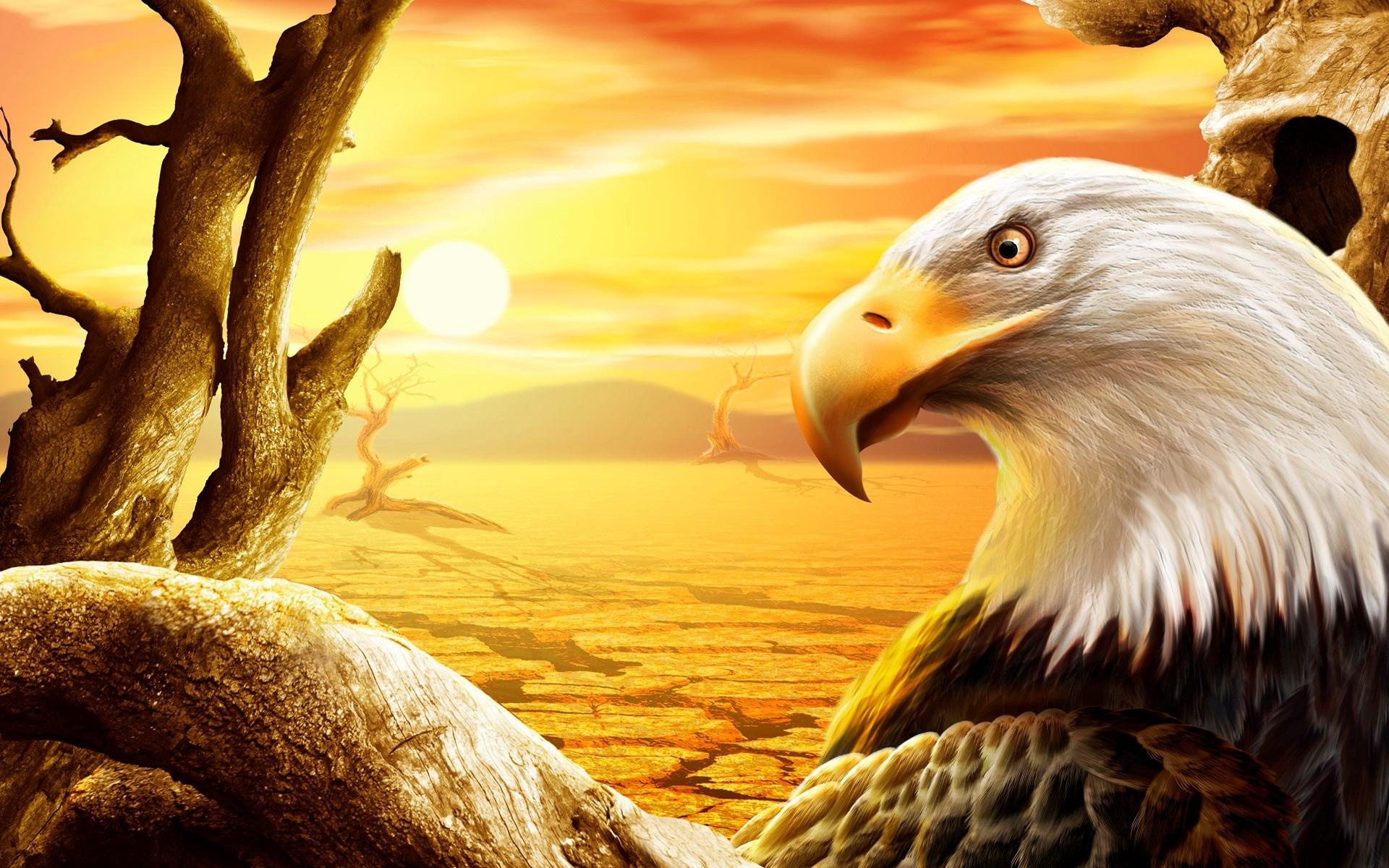 عکس عقاب ها