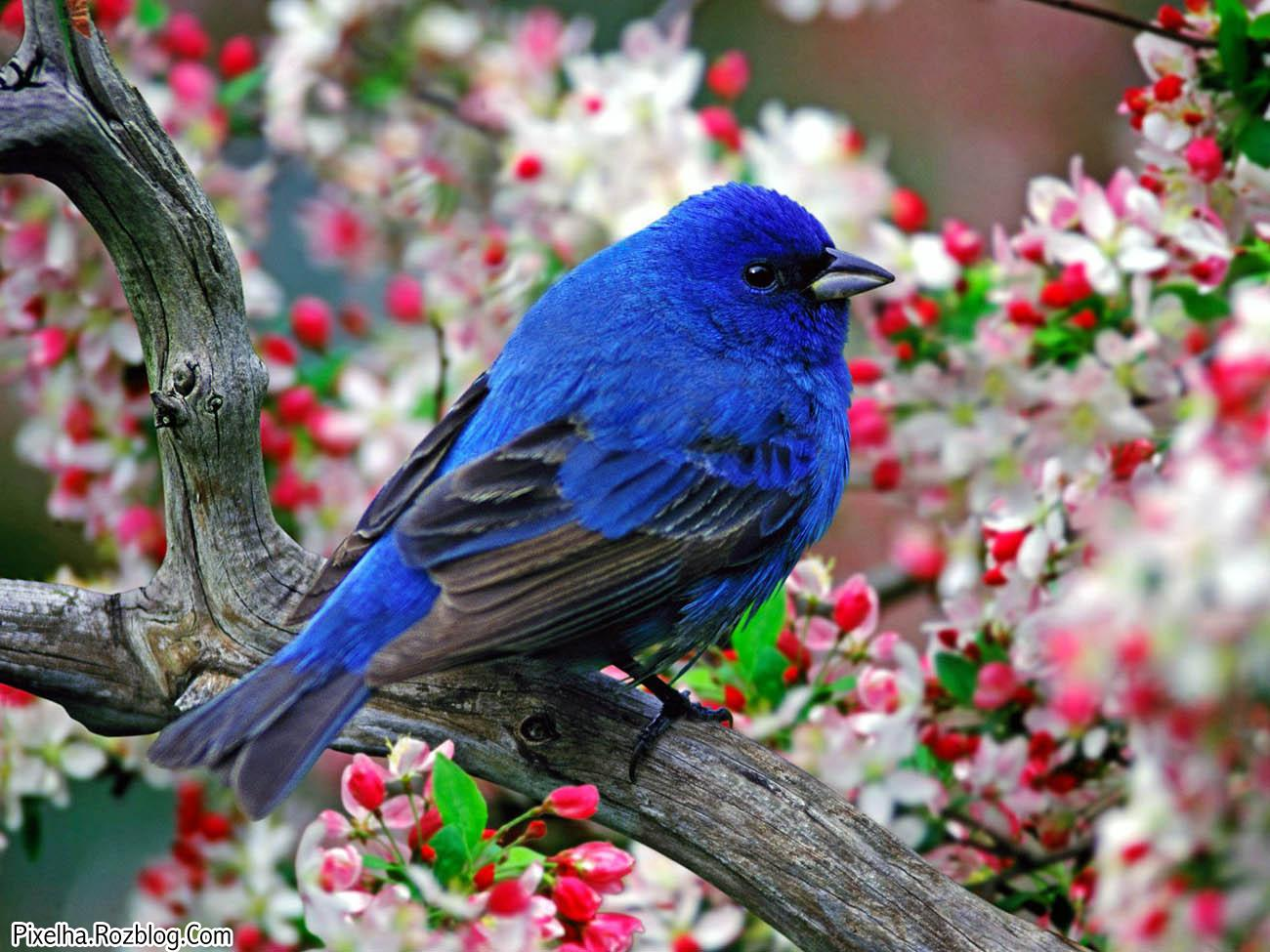 پرنده آبی خسته