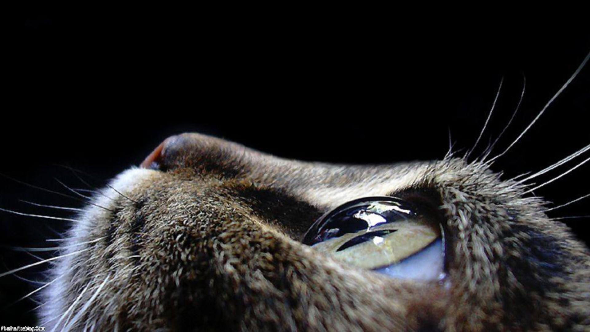 گربه با چشمان بزرگ