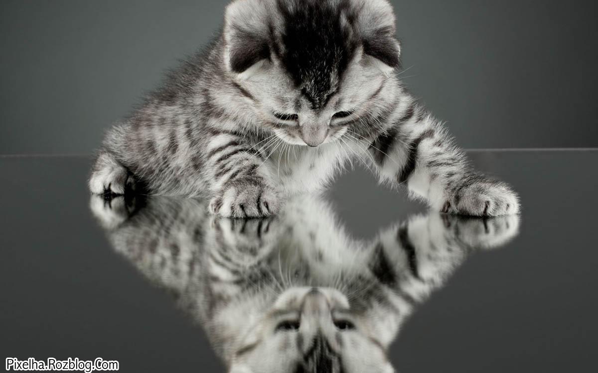 بچه گربه بامزه و آینه