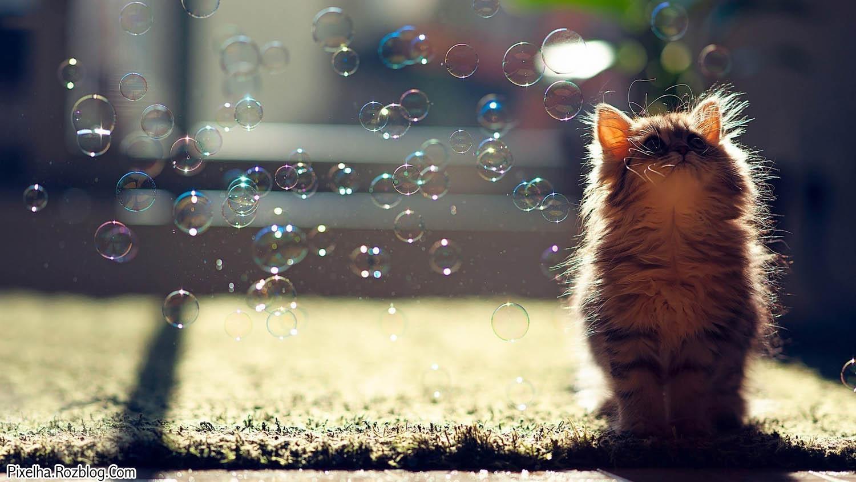 گربه کوچولو در کنار حباب