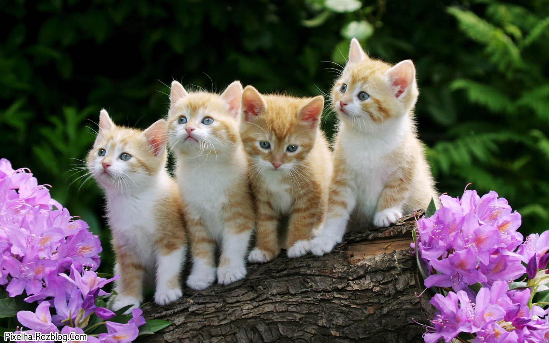 چهار بچه گربه ملوس و بامزه