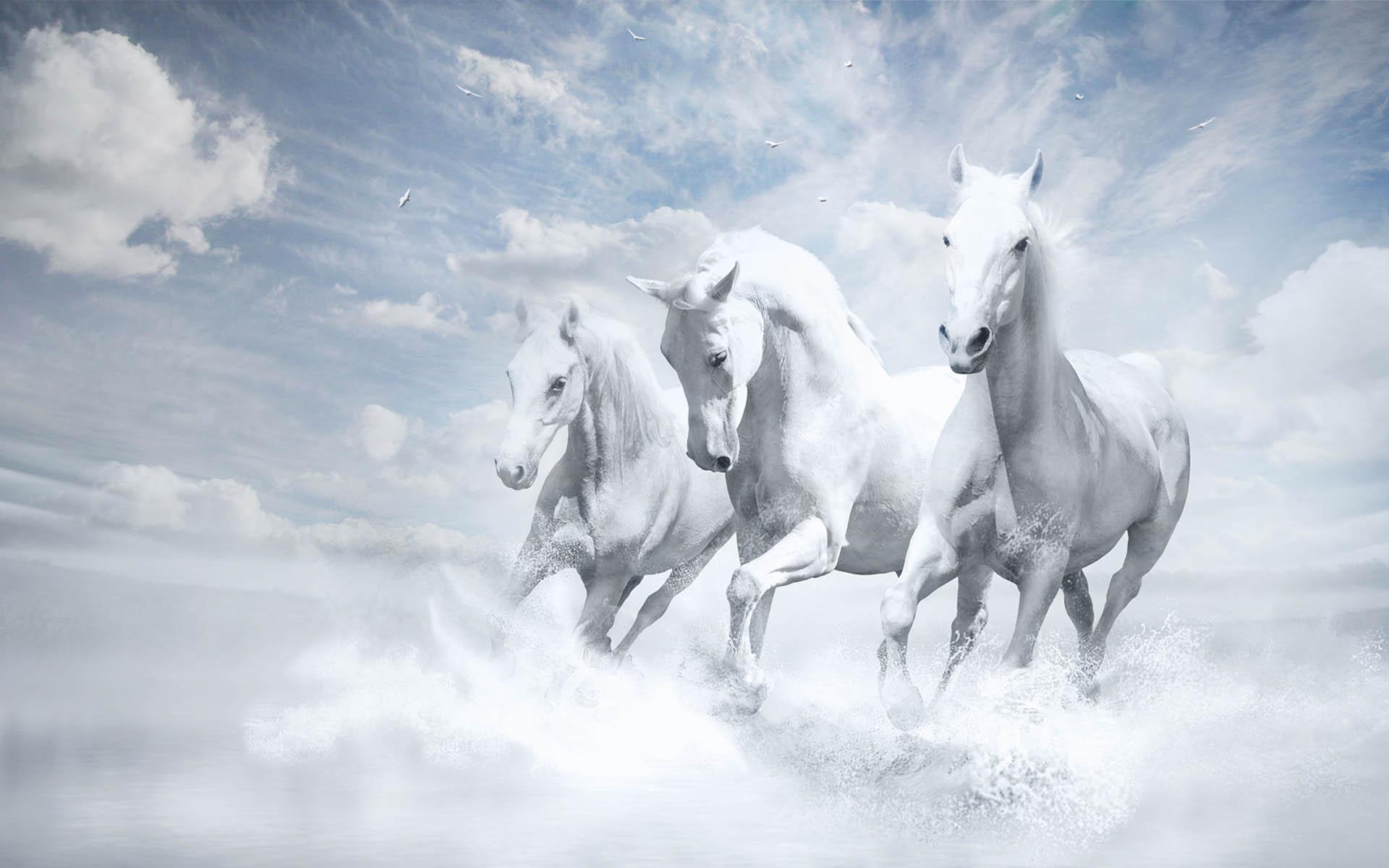 اسب های سفید