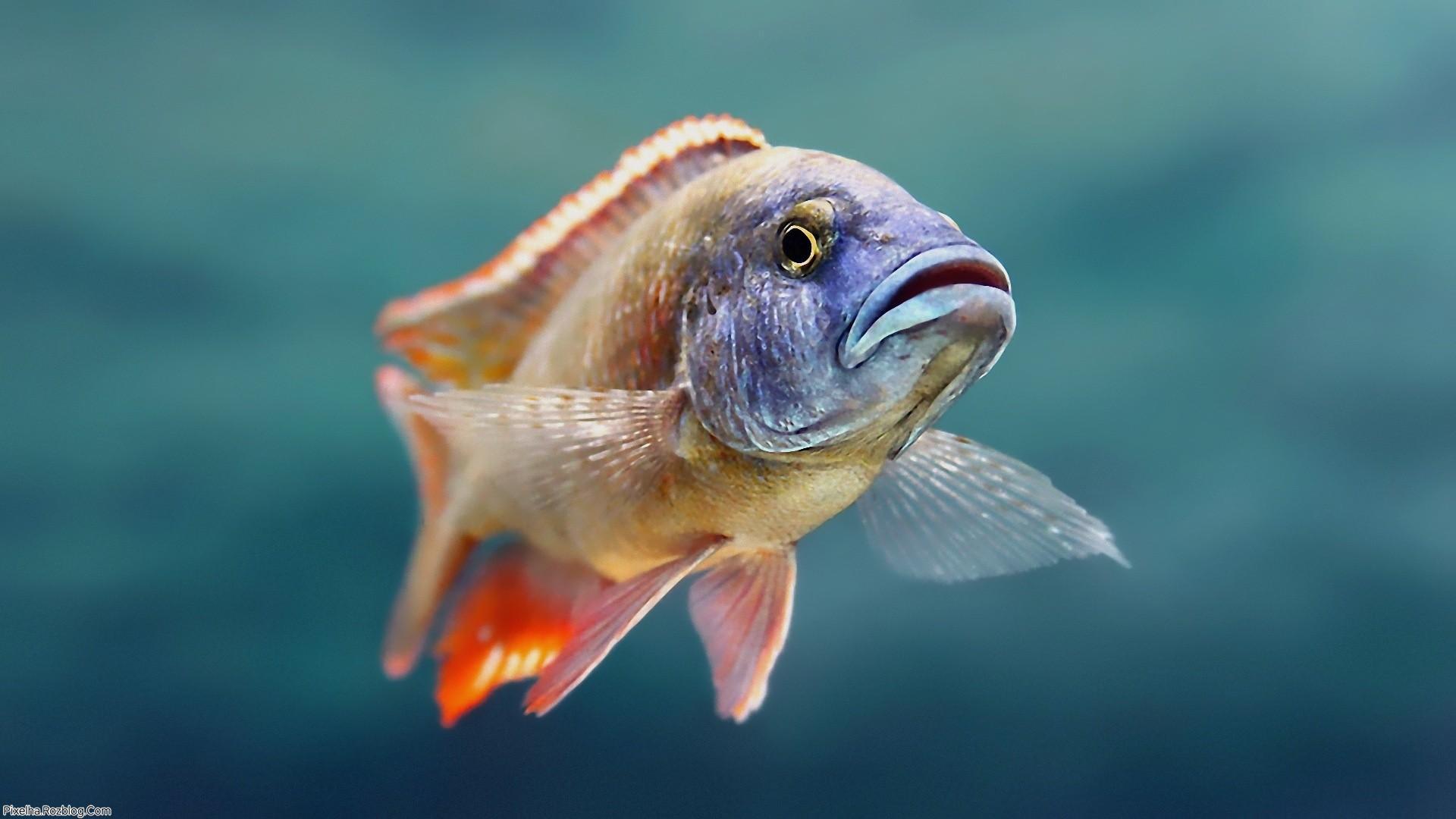 ماهی بسیار زیبا