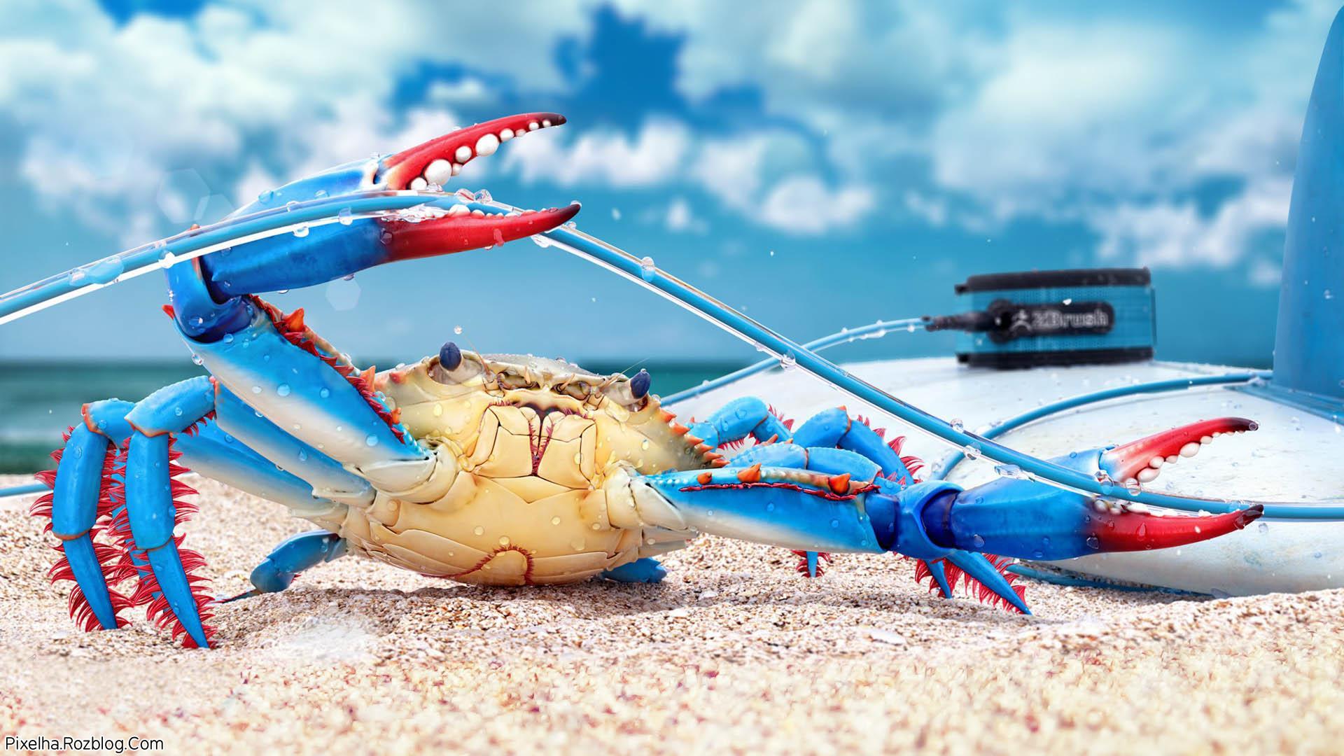 خرچنگ آبی
