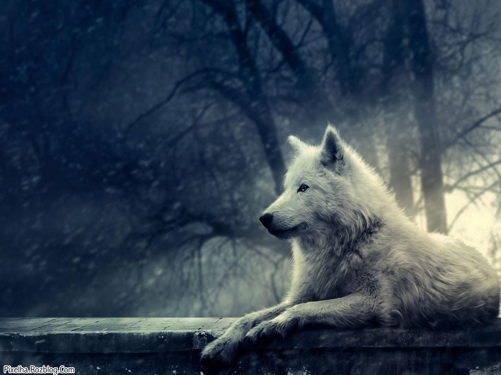 تصویری بسیار زیبا از گرگ