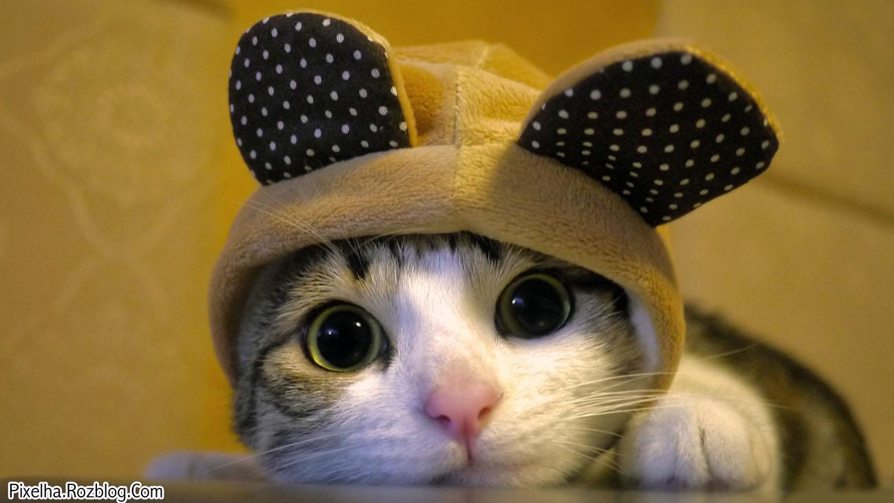 گربه بامزه چشم درشت کلاه خرگوشی