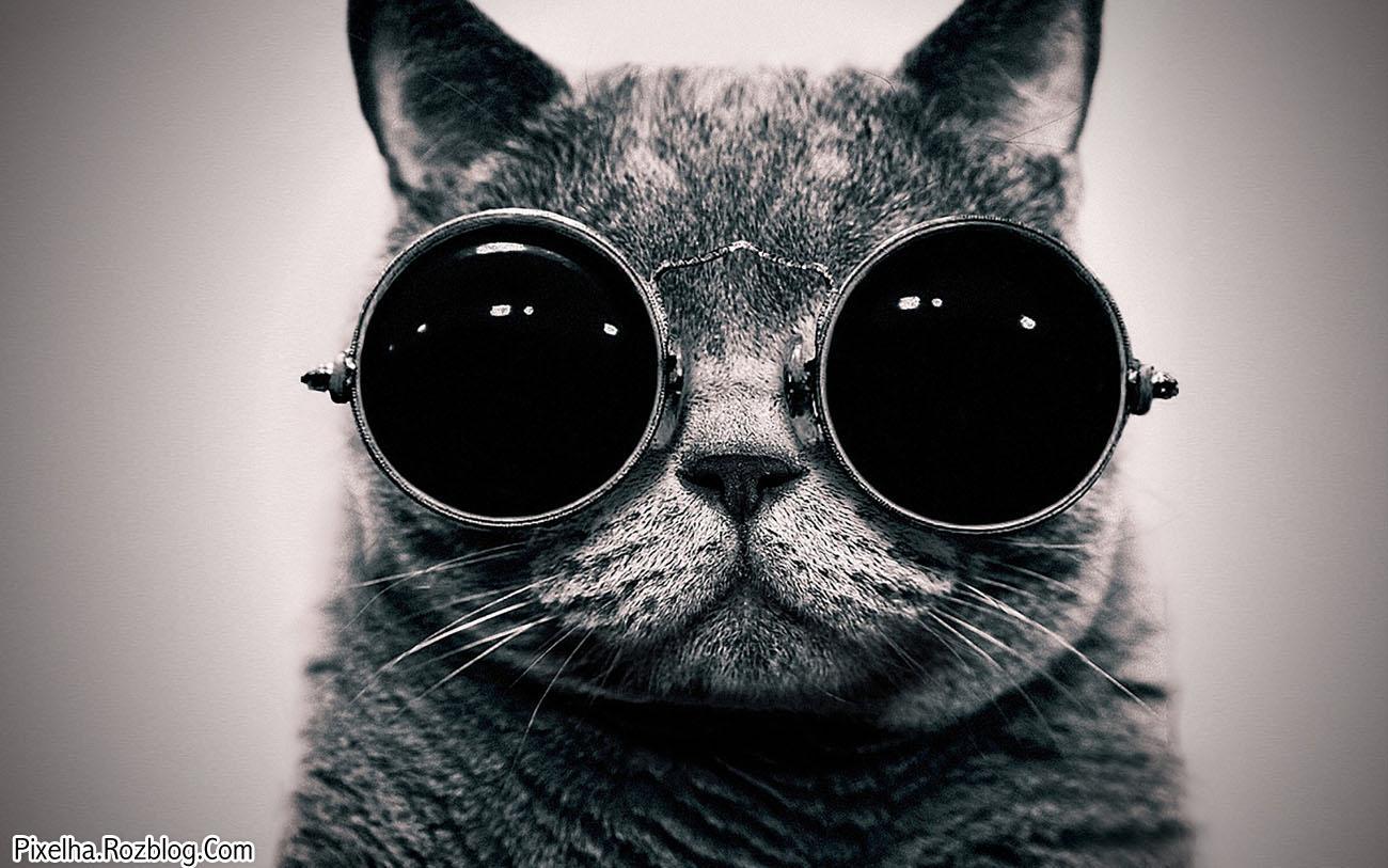 گربه با عینک آفتابی