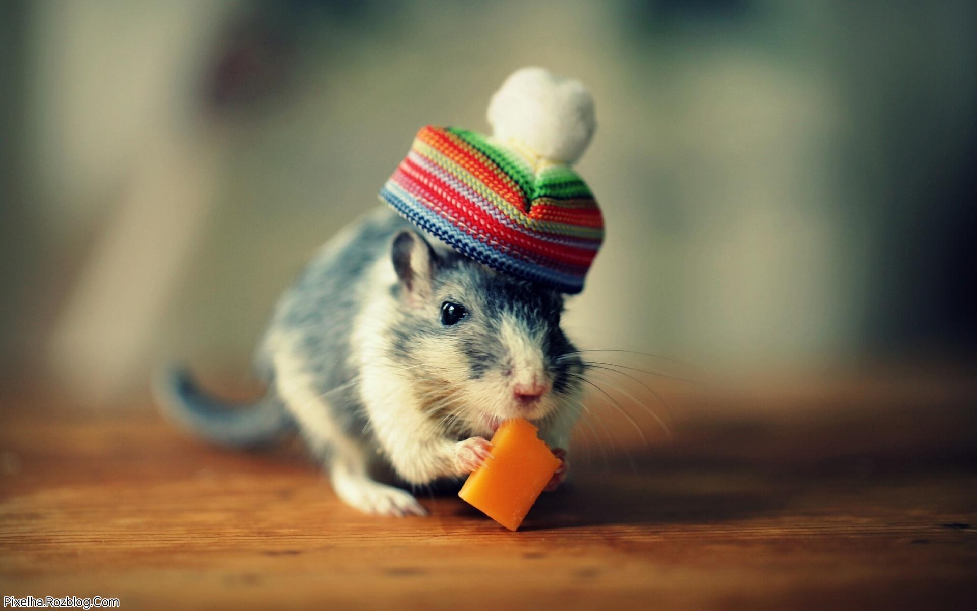 موش همراه با کلاه