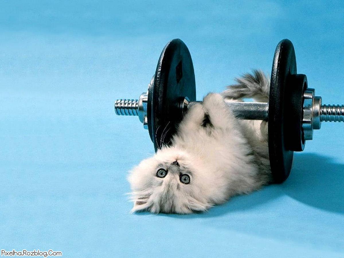 گربه وزنه بردار