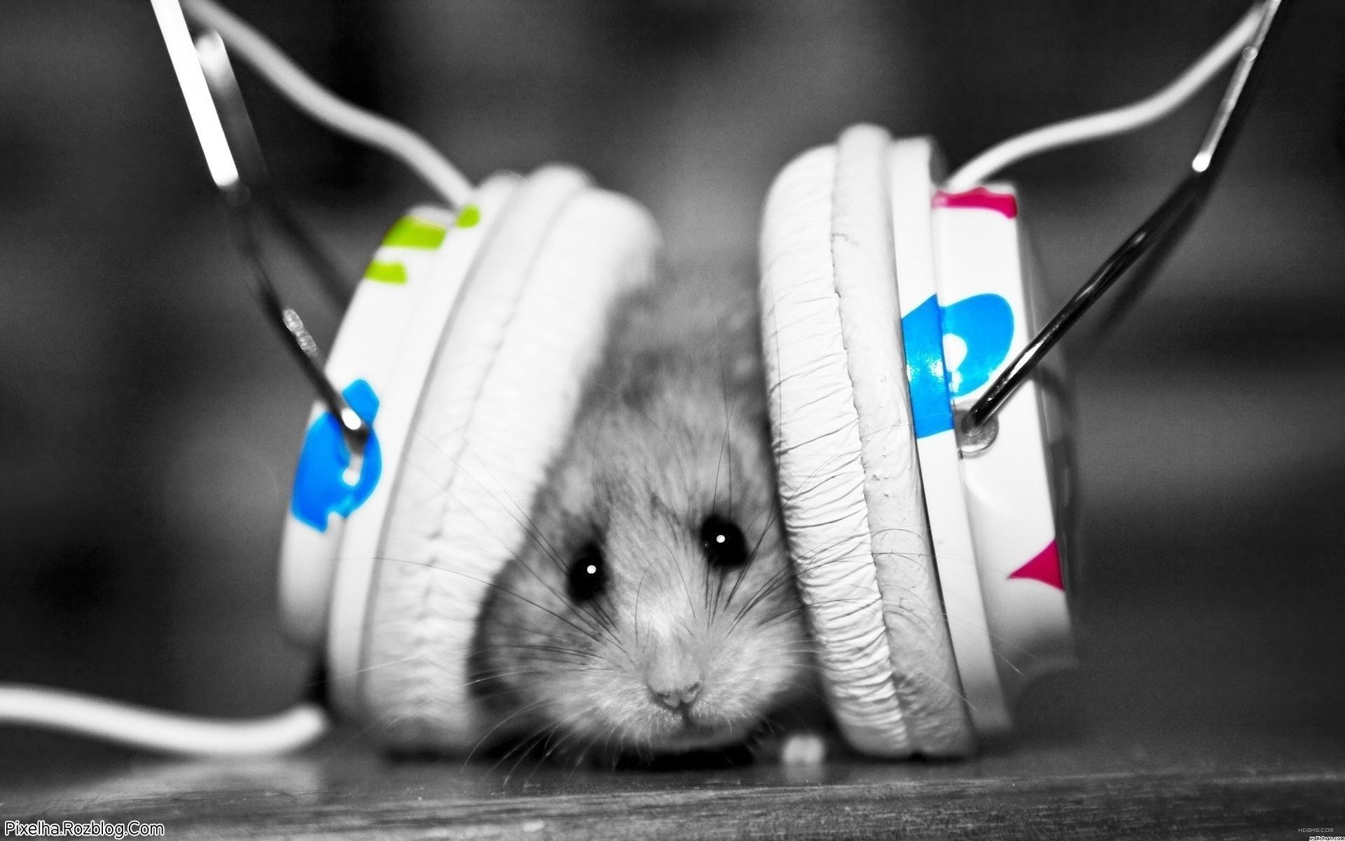موش در حال آهنگ گوش کردن