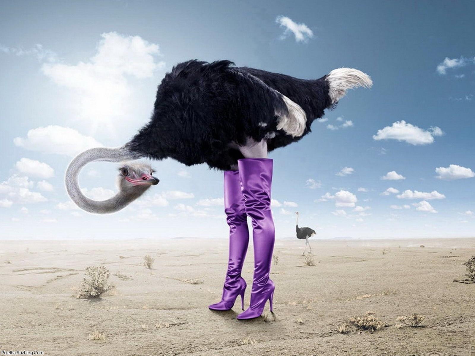 شترمرغ با کفش پاشنه بلند