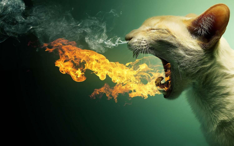 تصویر فتوشاپی گربه با دهان آتشین