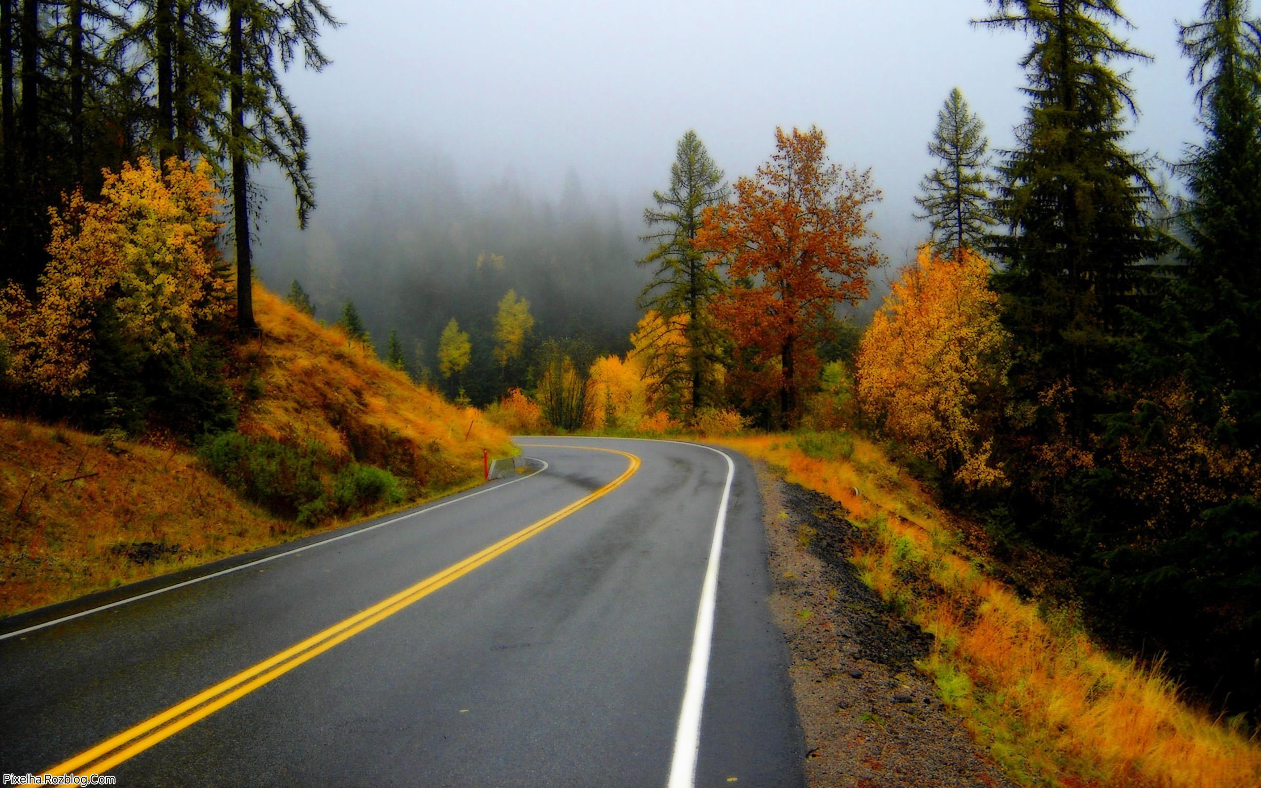مه در جاده پاییزی