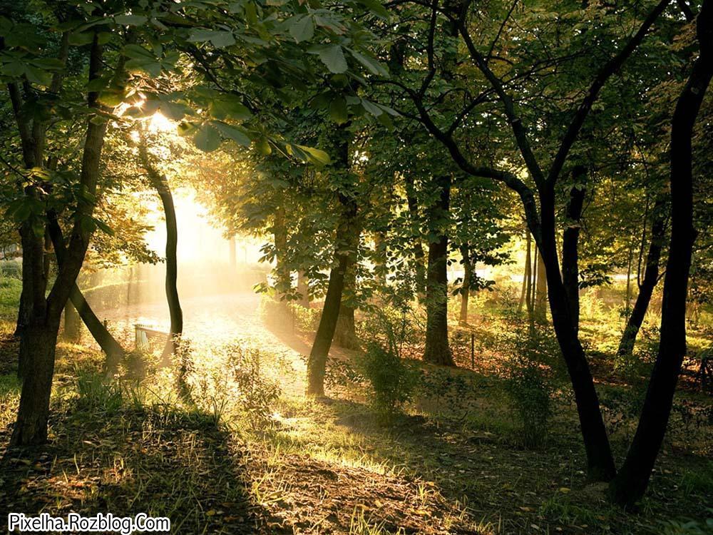 نور خورشید در میان درختان