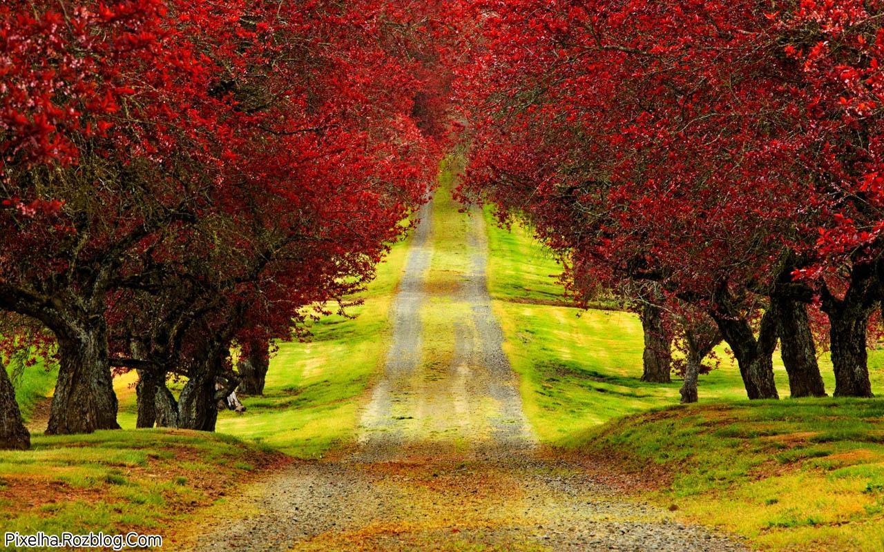 جاده پاییزی همراه با درختان قرمز