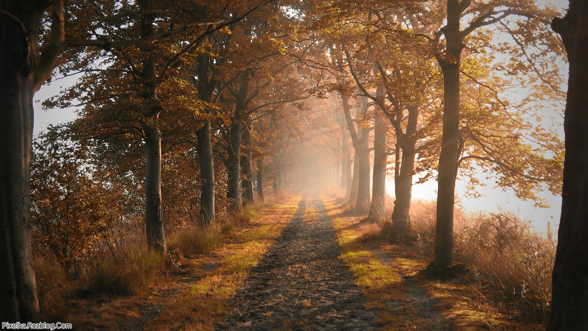 جاده و درختان پاییزی