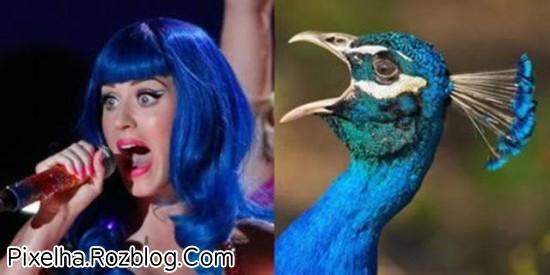 شباهت کتی پری با طاووس